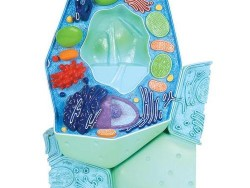 R05_01_Plant-cell-model